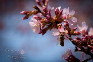 Dering Photography - Nature / Fine Art