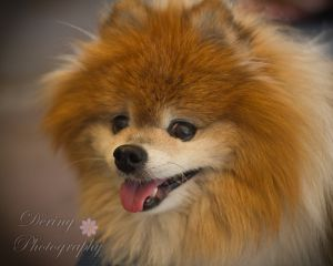 Dering Photography - Pets